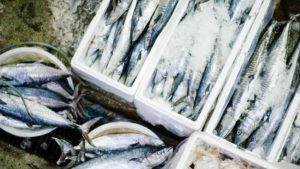 Visindustrie Voedselveiligheid