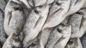 Productgroepen iMIS: vis schaaldieren schelpdieren